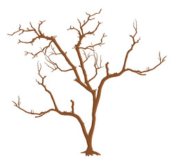 Dead Tree Branches Isolated