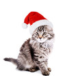 Beautiful kitten in Santa Claus hat isolated on white