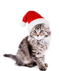 Beautiful kitten in Santa Claus hat isolated on white