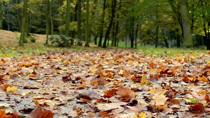 Fallen leaves - Autumn park (forest - trees)