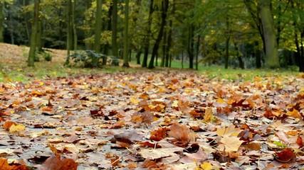 Fallen leaves - Autumn park (forest - trees)