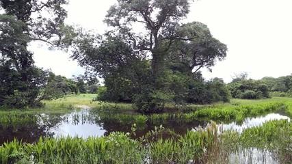 Pantanal landscape in Brazil