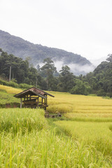 Terraced rice field with mountain view