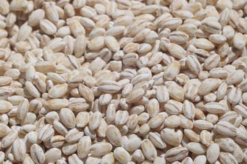 orzo cereali