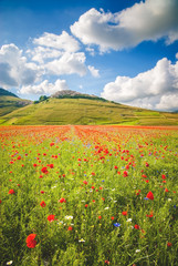 Summer day in the beautiful and colorful area of Castelluccio di