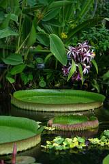 Marais tropical H