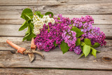 Purple-blue lilac and secateurs on a wooden table