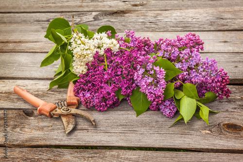 Papiers peints Lilac Purple-blue lilac and secateurs on a wooden table