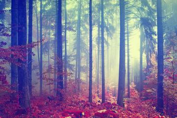 Magic color vintage forest