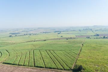 Aerial Flying Sugarcane Farmlands