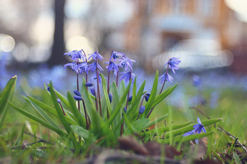 small blue flowers in city