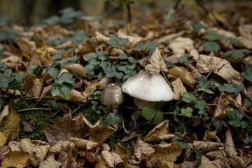 wild mushrooms growing among the vegetation