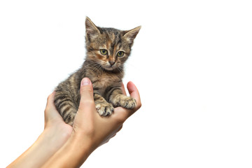Kitten on a hands