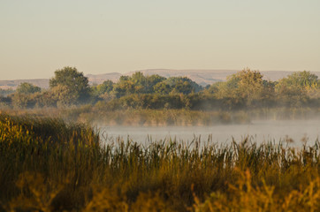 Tranquility on a Golden Autumn Morning in the Marsh