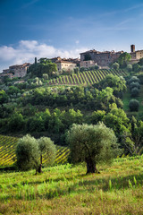 View of a small town with vineyards and olive trees