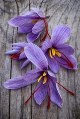 Saffron flowers (Crocus sativus)