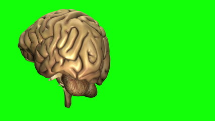 Rotating Healthy Brain
