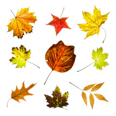 Colorful autumn leaves mix