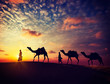 Two cameleers with camels in dunes of Thar deser - 72654643