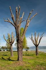 pruned_trees