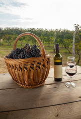Wine And Grapes On Table In Vineyard