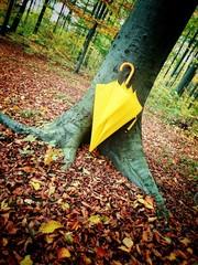 Im Oktober im Wald