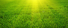 "Постер, картина, фотообои ""Green lawn for background"""