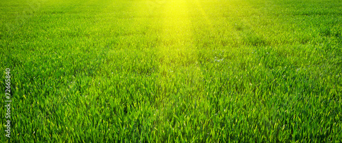 Foto op Canvas Gras Green lawn for background