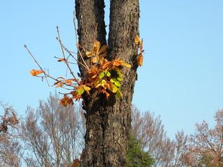 Un tronco