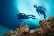 canvas print picture - Freedivers
