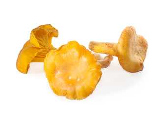 Chanterelles mushrooms on a white background.