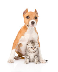 dog and small cat sitting together. isolated on white background