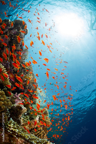 Red Sea - 72670472