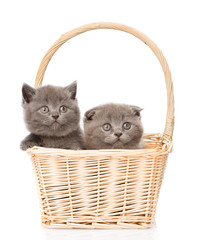 two cute kittens in basket looking at camera. isolated on white