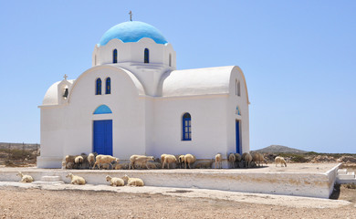 Beautiful typical greek small church occupied by sheep on Karpat