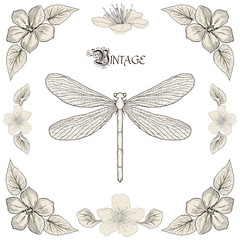 dragonfly drawing vintage engraving style