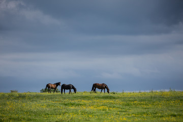Three horses in a field with stormy dark skies
