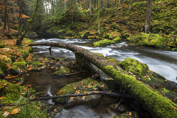 Großer Regen im Nationalpark Bayerischer Wald, Herbst