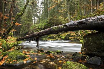 Großer Regen im Nationalpark Bayerischer Wald