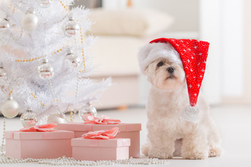 Little dog wearing Santa Claus hat