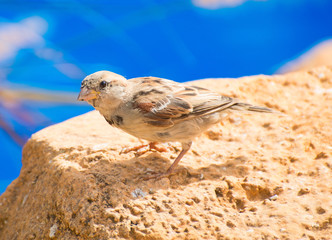Curious sparrow sits on a stone.