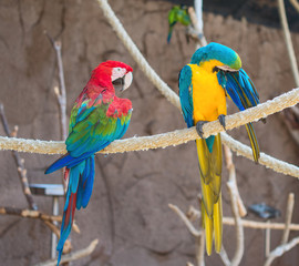 Two parrots sitting on branch in national park.