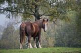Cavalli al Prato 29