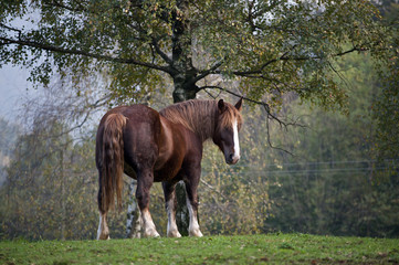 Cavallo a riposo