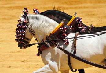 Andalusian horses, Andalucia, Spain