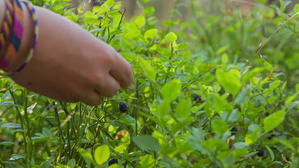 teen girl collects blueberries in forest, slide dolly move