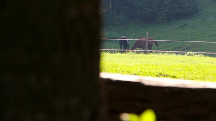 Two horses grazing in a meadow