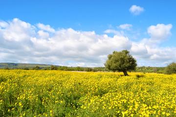 Panorama con prato fiorito - albero.