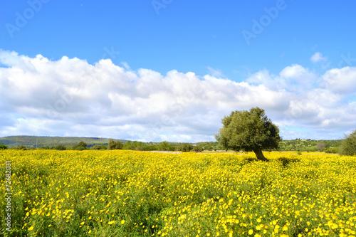 Panorama con prato fiorito - albero di ulivo. - 72682031