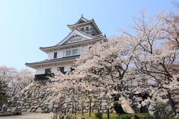 桜満開の長浜城